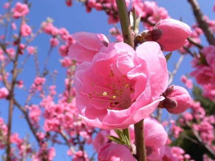 Meteo cf vda aria umida in arrivo sole a tratti nel - Immagini di fiori tedeschi ...